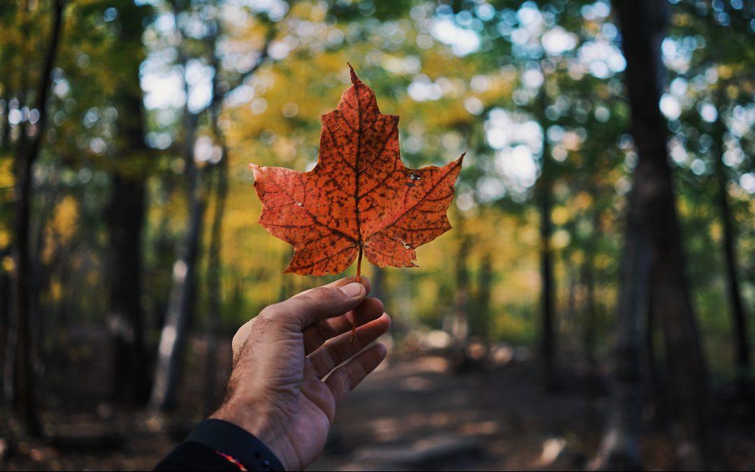 L'apprentissage informel au Canada, sous toutes ses coutures